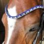 Frontriem-Pony-blauw