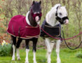 PRE-ORDER-1337A-HB-Showtime-Harry-and-Hector-Dutch-Crown-little-sizes